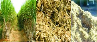 best price sugarcane Bagasse for sale