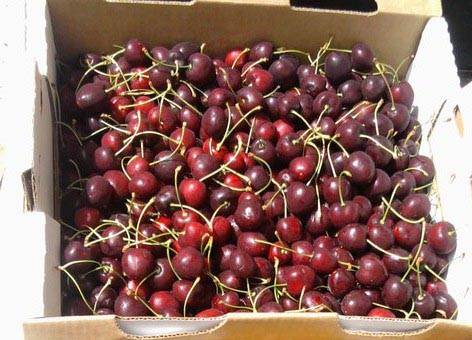 sweet black cherries