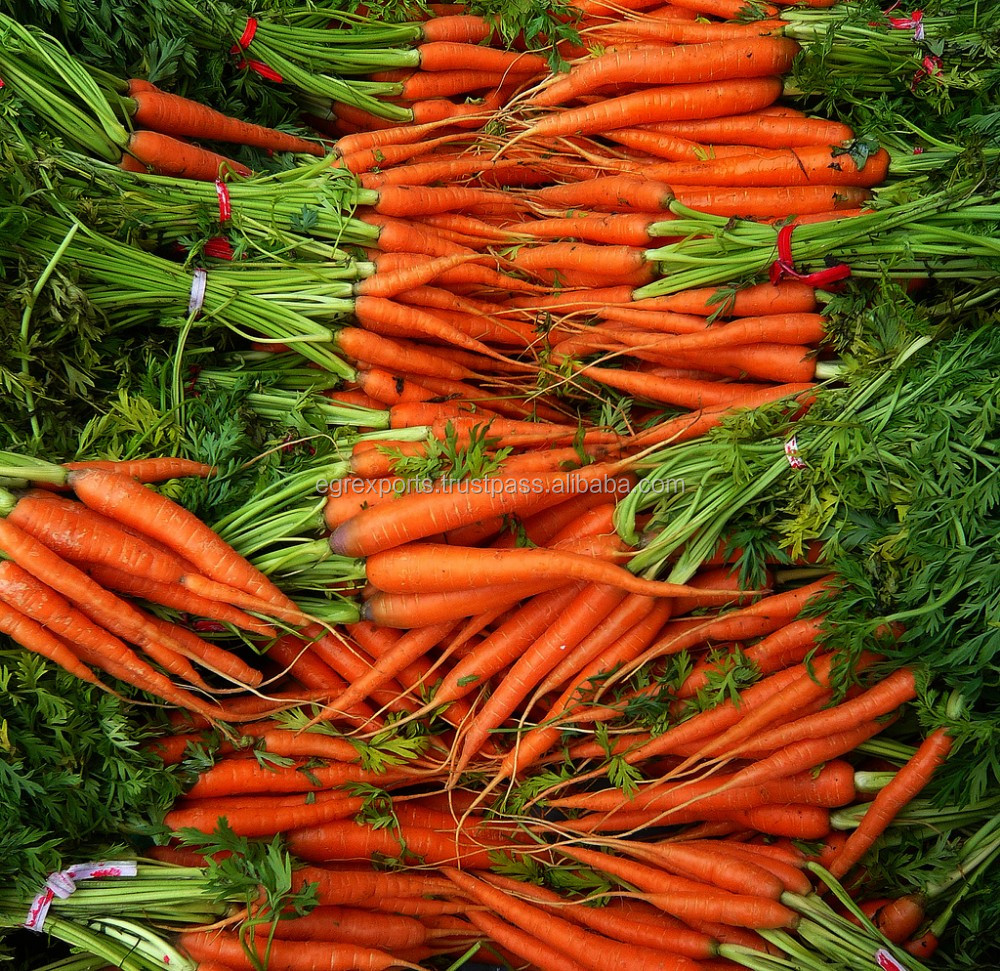 Wholesales Cheap 2017 Indian Fresh Carrots at Lowest Price