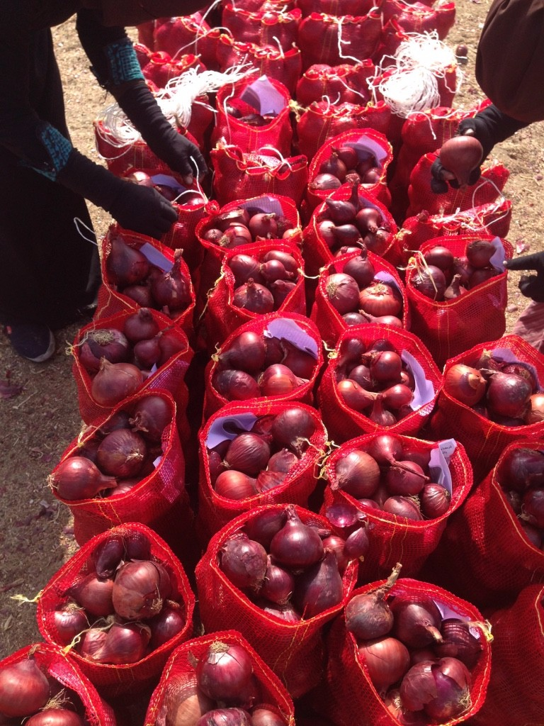 APPLY FOR SGS Certification of Egyptian Fresh Red Onions