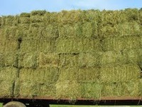 ANIMAL FEED,( YELLOW CORN , WHEAT, SOYBEANS, ALFALFA HAY, FISH MEAL, YEAST) FROM FOR SALE
