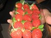 Egyptian red fresh organic strawberry