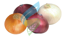 Producer, Grower & Exporters of Fresh Indian Vegetable Onions