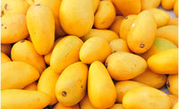 Yellow Mango for sale