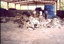 Grade A+ Animal Dry and Wet Salted Donkey/Goat Skin /Wet Salted Cow Hides Etc