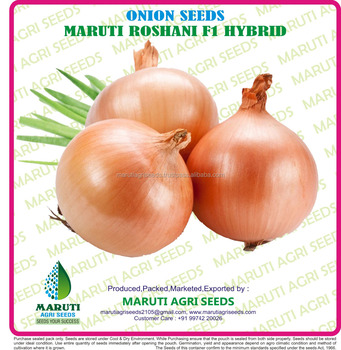 GOLDEN ONION SEEDS F1 HYBRID