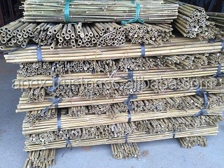 Bamboo canes suppliers for Planters, Plant support