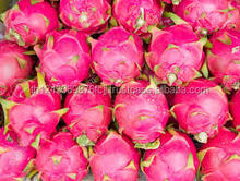 Fresh dragon fruit quality for sale best price