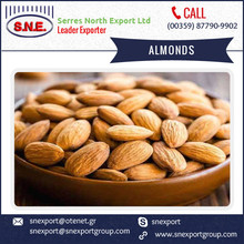 Economical Price Precisely Processed Sweet Almonds