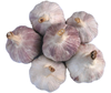 Vietnam High Quality Fresh Garlic
