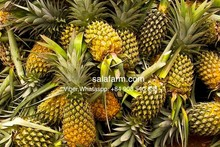 Pineapple and fresh pineapple price, 200-400 tons/month