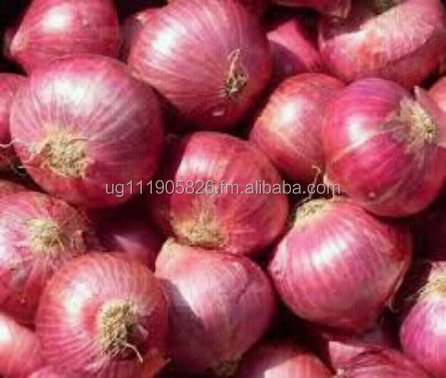 Fresh high content red bulb onions