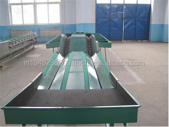 Automatic Feeding Onion Grading Machine For Factory