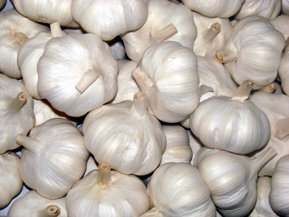 Natural Garlic With Good Quality in India