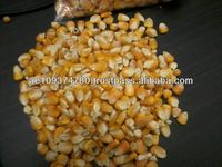 Yellow Maize for feed (Grade # 2)