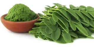 Fresh Methi Leaves/Fenugreek Leaves/Fresh Leafy Vegetables