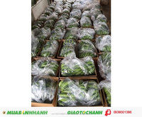 VietNam Fresh/Green Cavendish Banana for sale/ High Quality/Best Price.