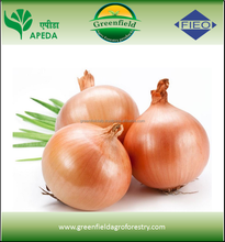 Red Onion India Export