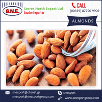 Super Condition Wide Range of Almonds at Customized Range for Sale