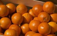 Fresh Oranges , fresh fruit and fresh oranges Citrus sweet mandarin orange ,