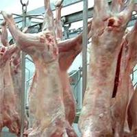 Halal Mutton Carcass