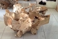 Characteristics natural JEPARA root coffee table