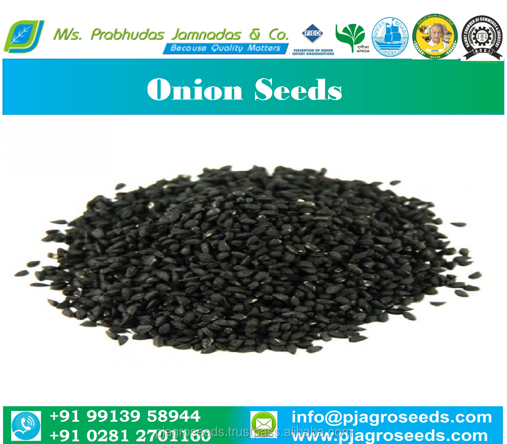 Onion Seeds Low Price