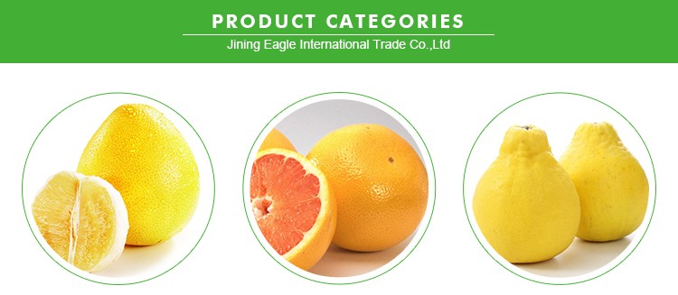 Fresh pomelo fruit of export standard with lowest price