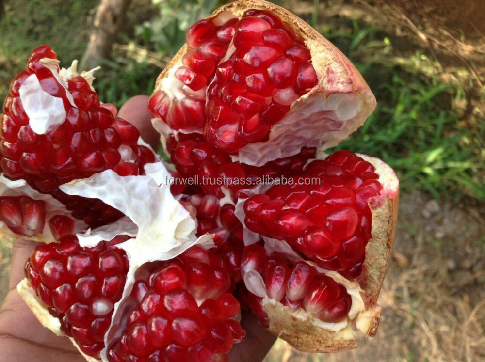 High quality Seedless Pomegranates from Egypt