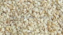 SESAME SEEDS INDIA AND SUDAN