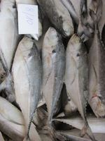 High Quality Horse Mackerel /Pacific/Indian/fish for sale