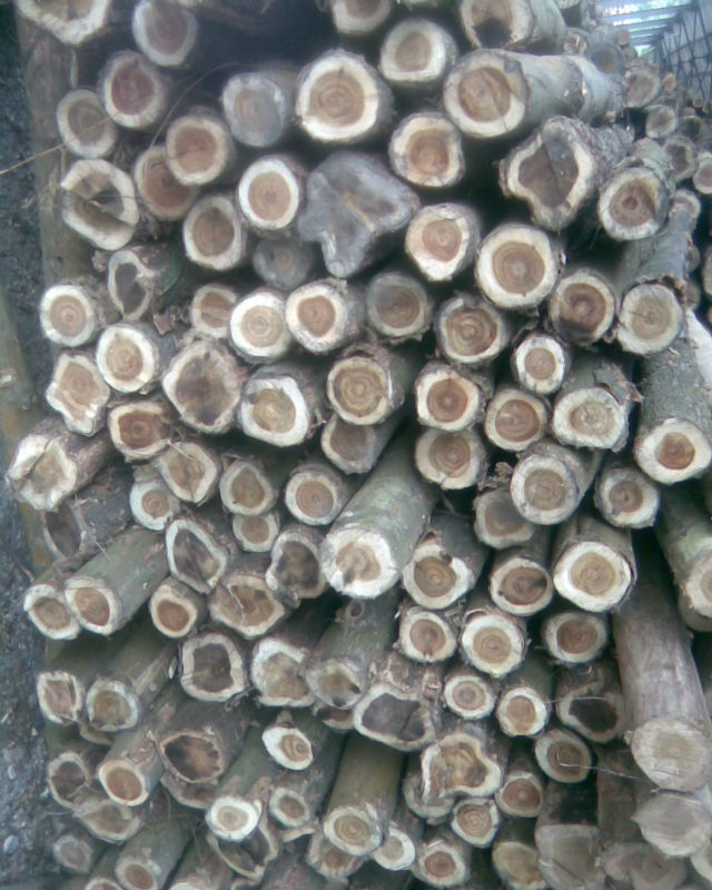 Acacia wood log for importers at reasonable price