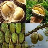 Fresh Durian Fruits high quality GRADE a FOR SALE HOT SALES