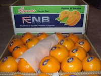 Investment opportunity in Kino Orange Mandarin Business ( Naqshbandi Enterprises Pakistan )