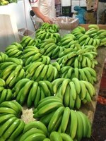 VIETNAM HIGH QUALITY , FRESH,GREEN COLOR CAVENDISH BANANA