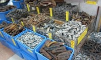 HIGH QUALITY DRIED SEA CUCUMBER FROM INDONESIA