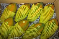 Papaya - Small or Bulk Shipments - Contact Us For Free Samples