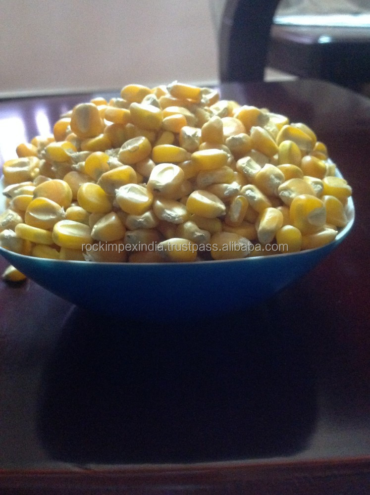 YELLOW MAIZE IN TAMILNADU