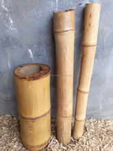 APUS YELLOW BAMBOO
