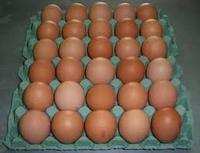 Fresh Brown and White Large Eggs