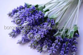 Lavender Oil in Essential Oil