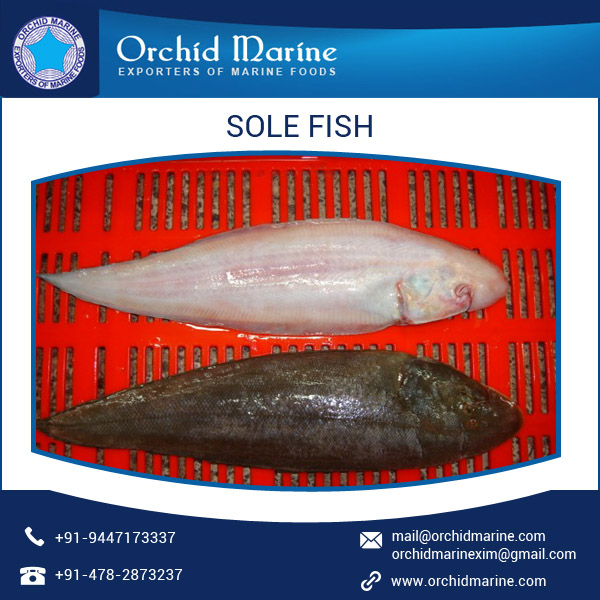 Healthy Competitive Price Fresh Frozen Sole Fish (Whole & Fillets)