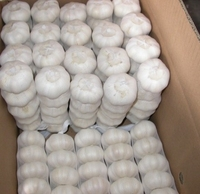 Natural Fresh white garlic wholesales