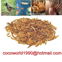 chickens eat dried mealworms/mealworm protein content/what can i feed my mealworms