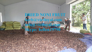 dried noni fruit extract powder