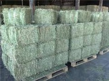 Top Quality Alfafa Hay For Animal feeding stuff Alfalfa / alfalfa hay / alfalfa hay READY NOW