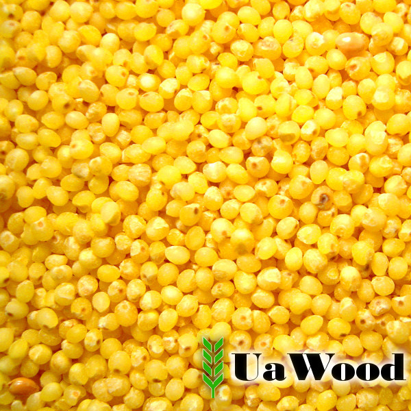 Yellow millet from Ukraine