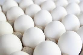 Quality White Table Eggs Exporters
