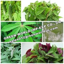 HOT SELLER_FROZEN VEGETABLE LEAVES_FROM VIETNAM