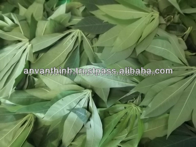 Frozen cassava leaves rectangular, Frozen Vegetable